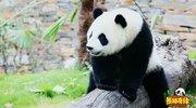 北京电视台北京卫视熊猫奇缘
